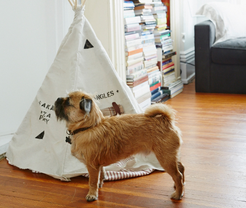 Mr.Bojangles reaps the benefit of living with artists. Hession made him this canvas teepee and many colourful costumes.