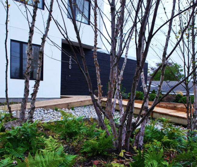 Native plants absorb run-off. Nathan Stewart of Escape Designs landscaped the site.